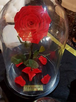 Timeless Rose by Fleur D'Amourpk
