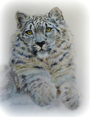 Snow Leopard-full